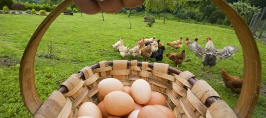 nutricion comer huevos ecologicos